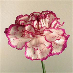 la symbolique des fleurs - pause, au jardin des roses